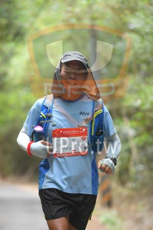 綠色隧道7(中年人):2014,南扣勾,*苗栗桐花季馬拉松1,5/19,2016 Miaoli Tong Hower Marat,42KM,0941