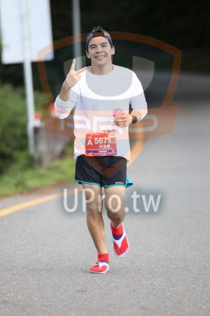 合歡山馬拉松11(Ming Jyun Wang):拉松,440,A 567,何浩揚