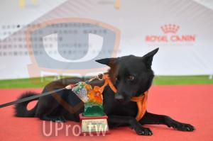 ():72013奔跑吧!狗小孩公益路跑,3公里挑戰組中型犬,UPRO運動平台,2019.04.27