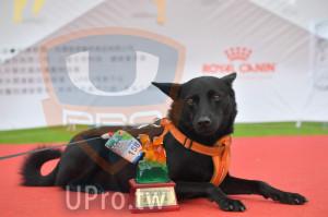 ():72013奔跑吧!狗小孩公益路,中型犬,3公里,挑戰組,第七,UPRO運動平台,2019.04.27