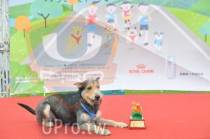 ():3成人中華民國6(護動物協會,ROYAL CANIN,2019, 4.27m,第八名
