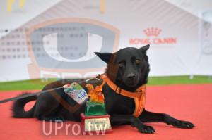 ():2019奔跑吧! 向小孩公益路跑,挑戰組,3公里,中型犬,第七,UPRO運動平台,2019.04.27