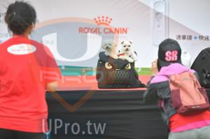 會場3(老人):ROYAL CANIN,速拿譜。快速,SB